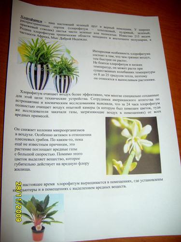 Мое любимое комнатное растение доклад 2810