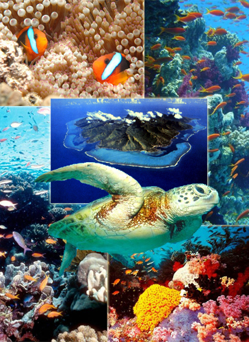 Доклад о большой барьерный риф 7199