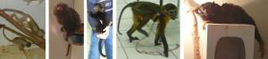 Выставка экзотических  животных в ТЦ «ENTERRA».