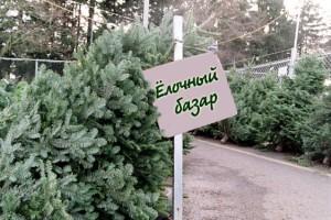 Инструкция по выбору живой елки