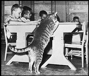 Класс Восемь. Добрая школьная история про  кота