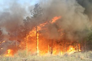 Краткий доклад по ОБЖ : «Природные пожары и их характеристика»