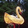 Лебедь в лампочках