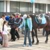 Катание на лошадках 1