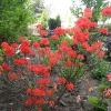 Цветы - огоньки