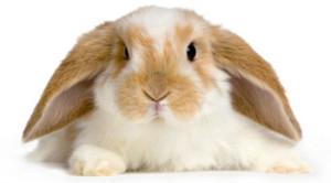 С чем на столе встречать на год кролика?