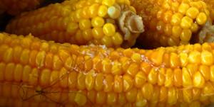 Вареная кукуруза.