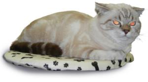 Выставка кошек в ТЦ «Пушкаревское кольцо».