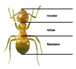 Задание по окружающему миру (3 класс): краткий доклад про муравьев.