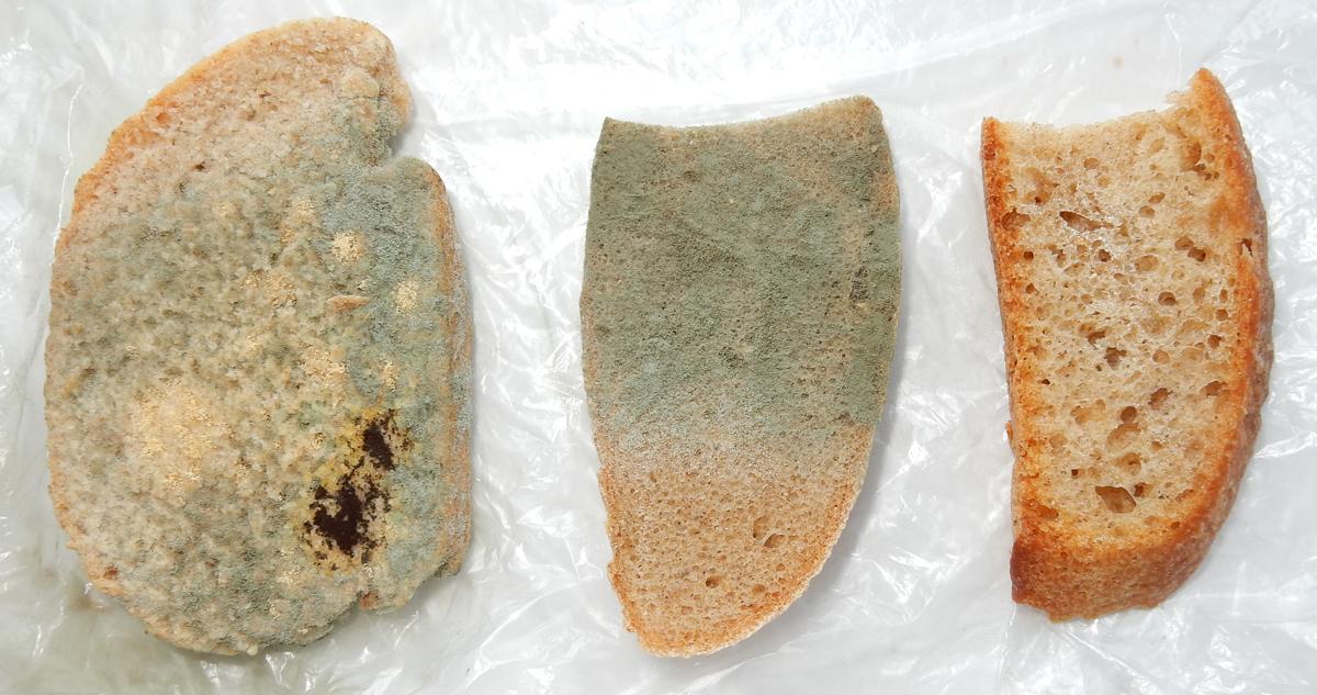 Как сделать дома хлебные дрожжи