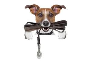 Статья для бесповодочных собачников