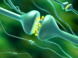 Нейромедиаторы Серотонин и Дофамин