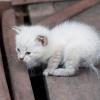 Родились у нас котята...