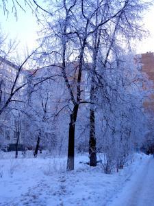Морозный день в январе